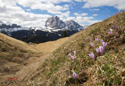 Primavera in Val Gardena