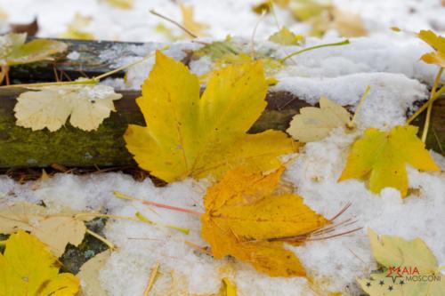 Autunno e inverno